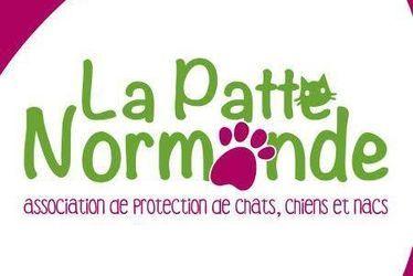 Patte Normande