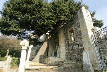 Cèdre du Liban Abbaye de Graville