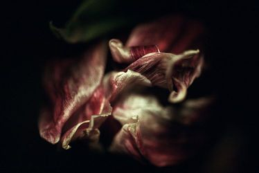 « Belles de nuit » de Marie Trolliet