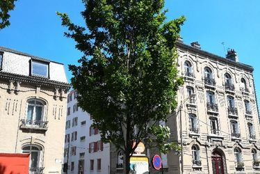 Chêne pédonculé fastigié du square Holker