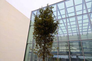 cite_numerique_-_arbre_philippe.jpg