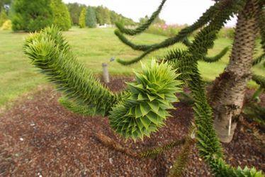 L'arboretum de conifères du parc de Montgeon