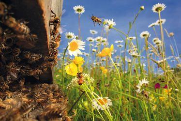 Une anthropologue au pays des abeilles