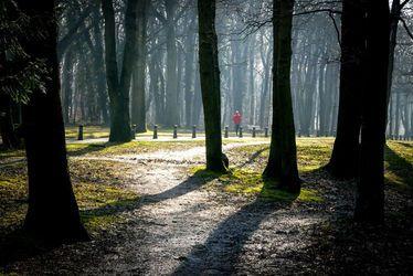 Forêt de Montgeon