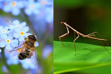 Les insectes du Muséum