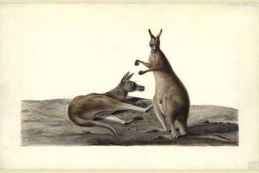museum-australie-2021
