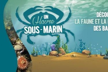 """Plongez dans """"Un Havre sous-marin"""""""