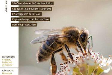 Les abeilles, familières et extraordinaires