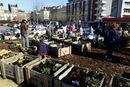 2014-danton-jardin_potager_collectif_le_havre-c_laurent_breard_-_ville_du_havre.jpg