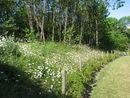 Flore locale-Jardins suspendus