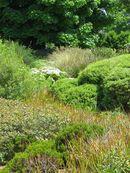 Bulbes et rhizomes-mercredis aux jardins