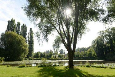 Etang du parc de Rouelles