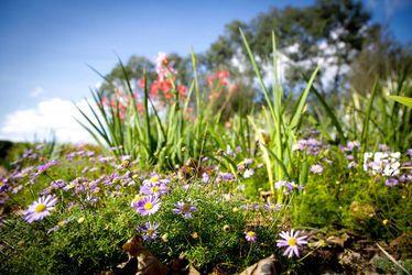 fleurs, printemps, jardin