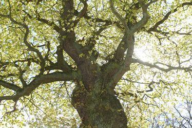 gros-plan-arbre.jpg