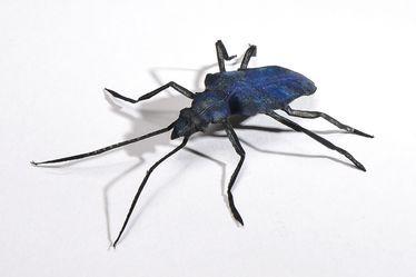 Mes insectes de papier