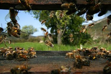 Le secret des abeilles