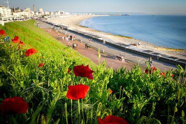 """Une 4e libellule au label """"Ville-nature"""" pour Le Havre"""