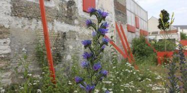Friche Haudry : bienvenue dans un jardin spontané !