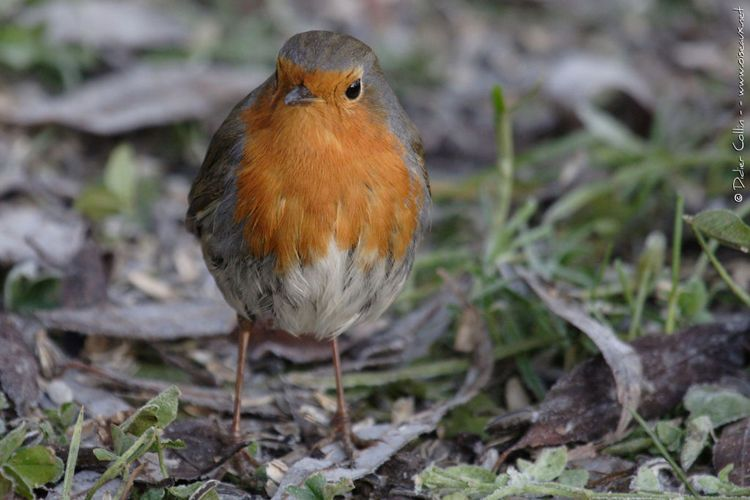 Avec Le Havre Nature, reconnaissez le chant des oiseaux et observer les espèces de notre ville
