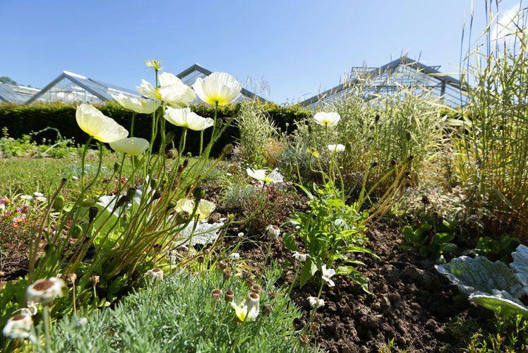 Les jardins suspendus d crochent le label jardins for Jardins suspendus le havre horaires