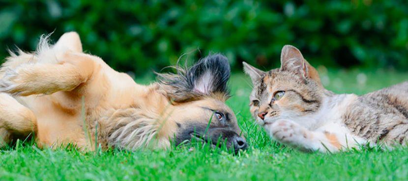 photo-chat-chien.jpg