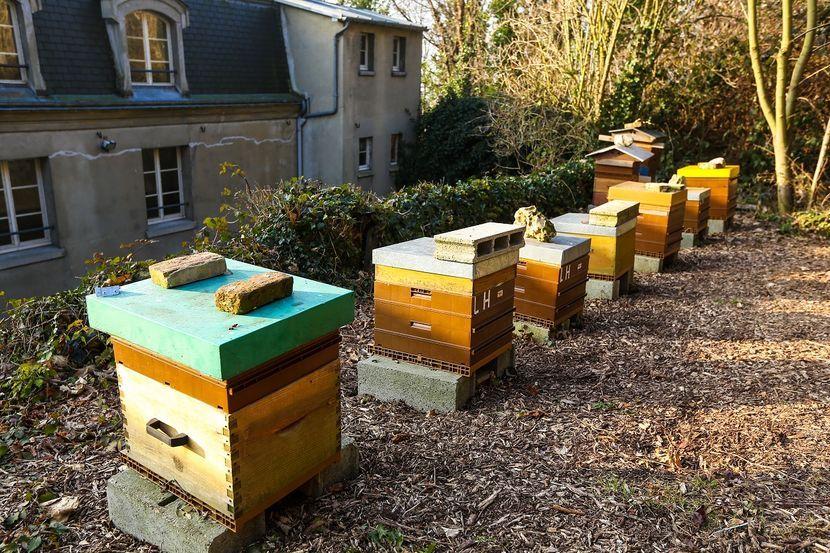 ruches-abeilles.jpg