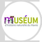 museum_histoire_naturel_havre.png